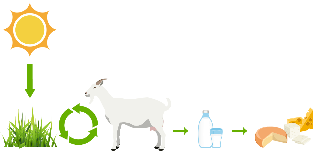 Farm clipart pasture. Intensive grazing windshadow cheese