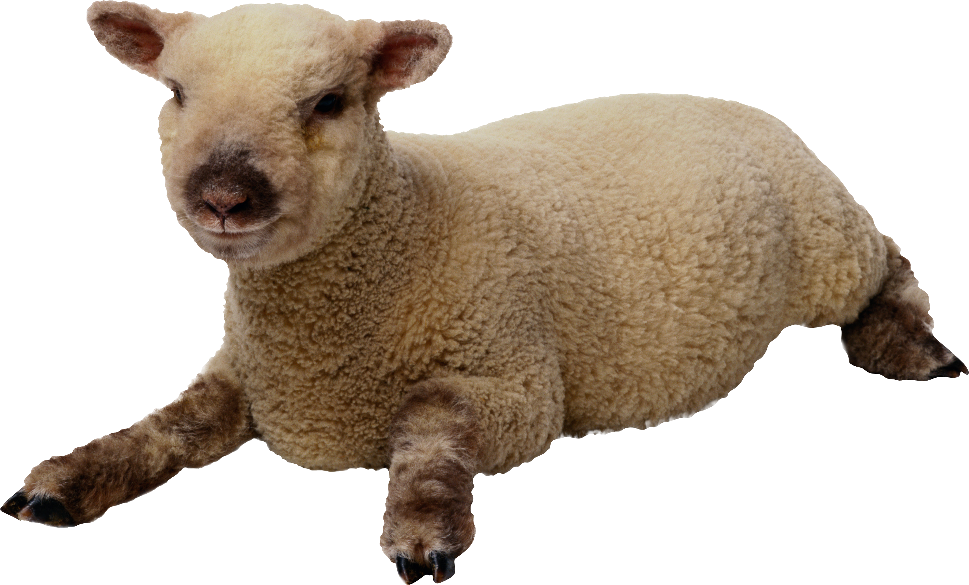 Lamb clipart dolly sheep. Images best free icons