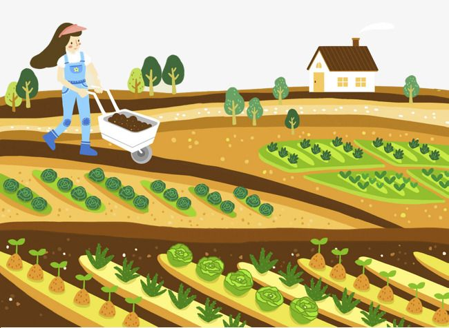 Farmhouse clipart farm land. Cartoon illustration vegetable growing
