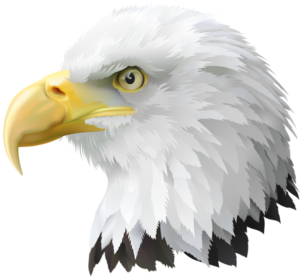July clipart eagle. American head transparent png