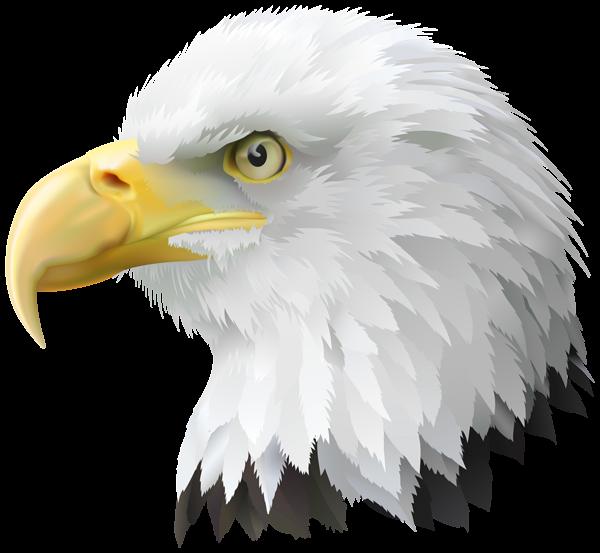 American head transparent png. Eagle clipart superhero