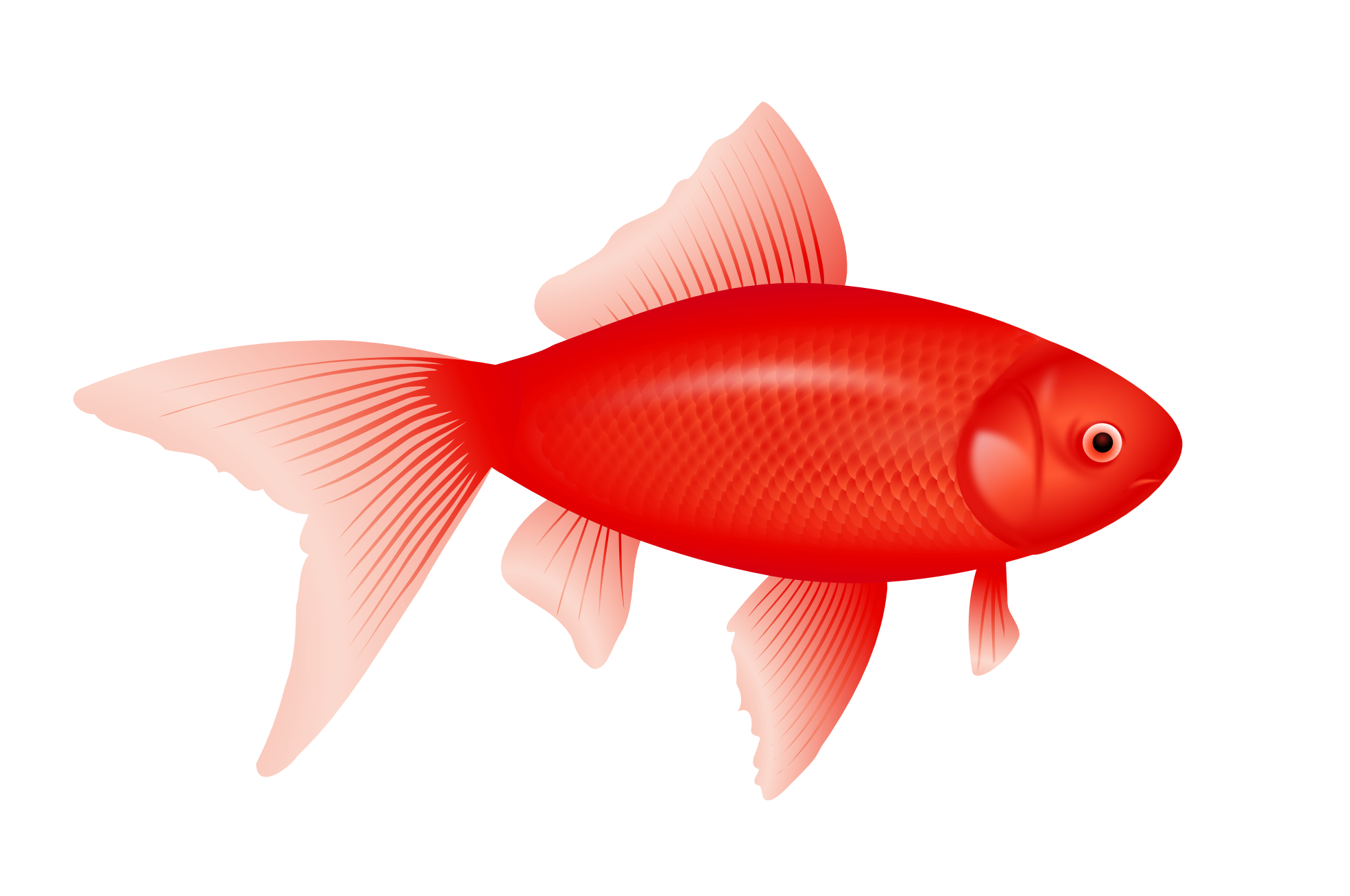 Trout clipart fish gill. Six isolated stock photo