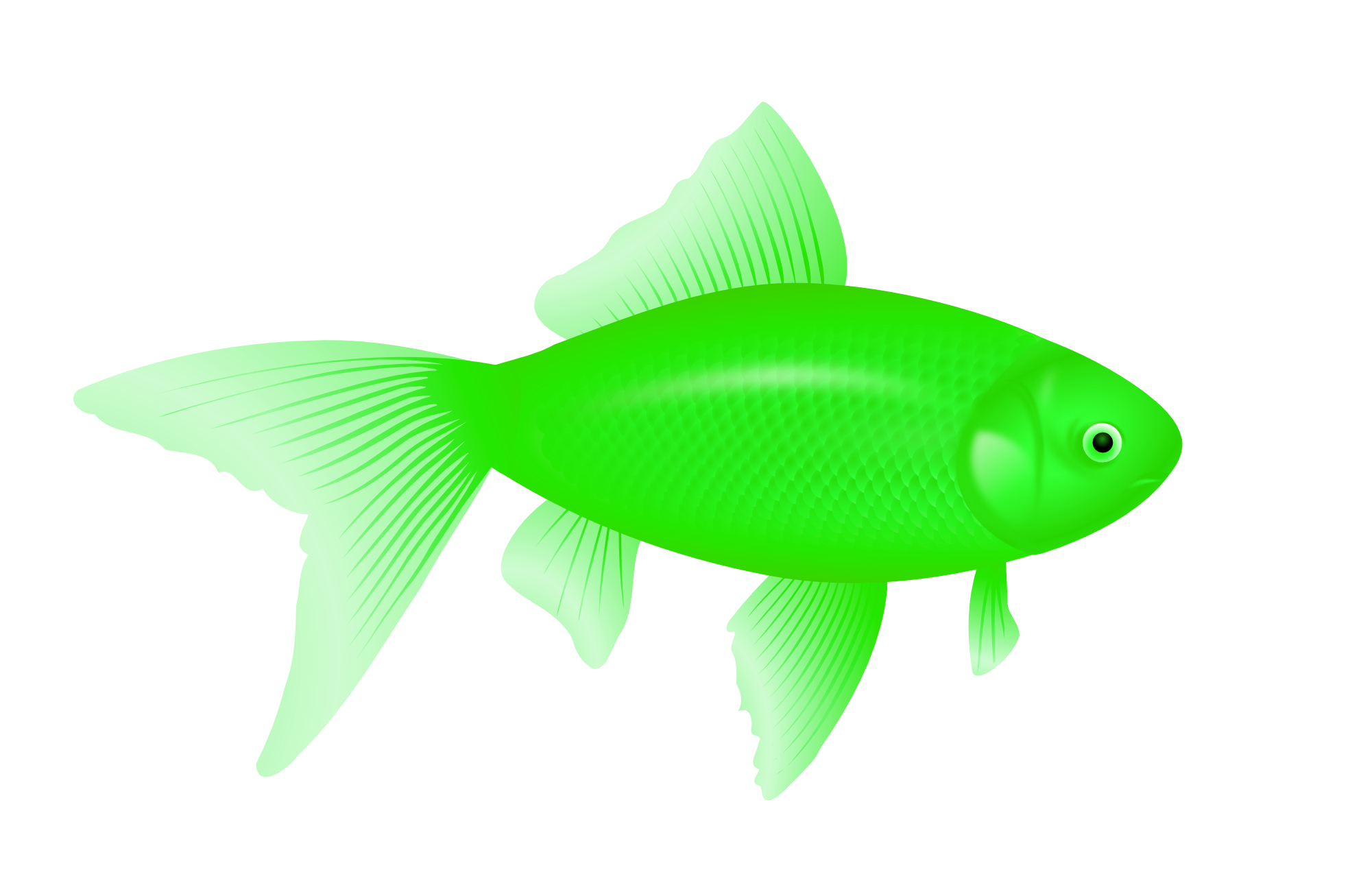 Eight isolated stock photo. Trout clipart fish gill
