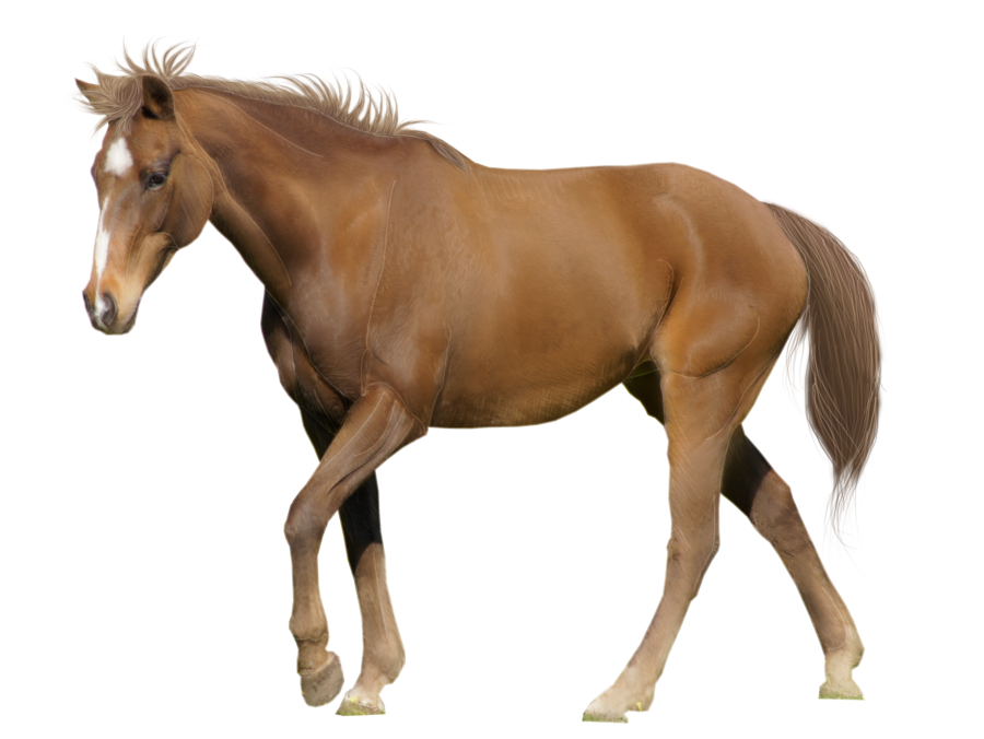 Thirty one isolated stock. Clipart fire horse