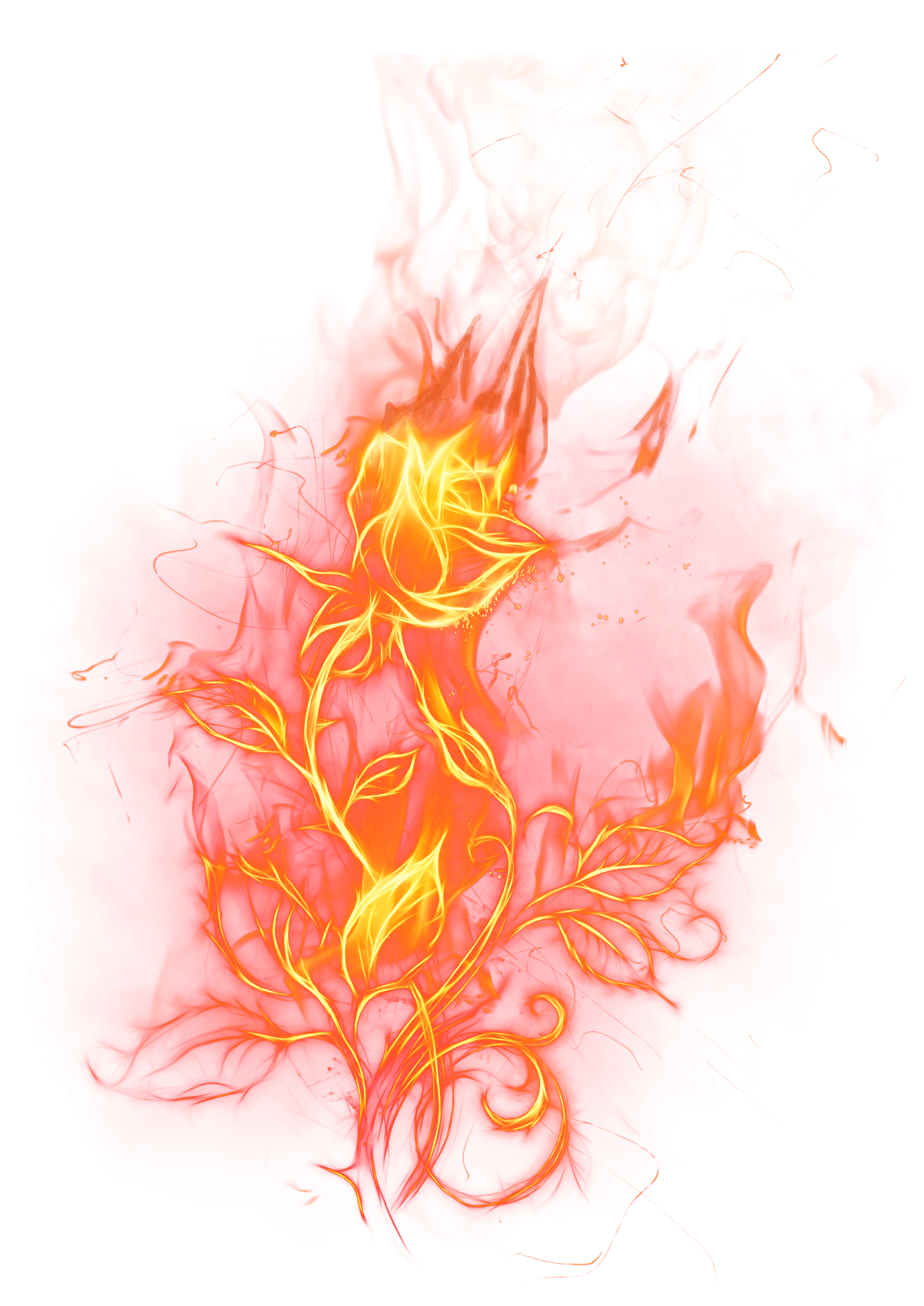 Fire flower png. Transparent rose clipart picture