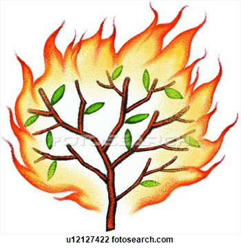 Icon panda free images. Fire clipart tree