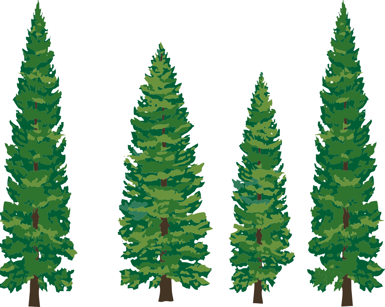 woodland clipart fir tree