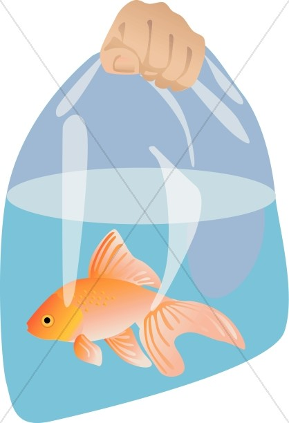Fish clipart bag. Goldfish in a harvest