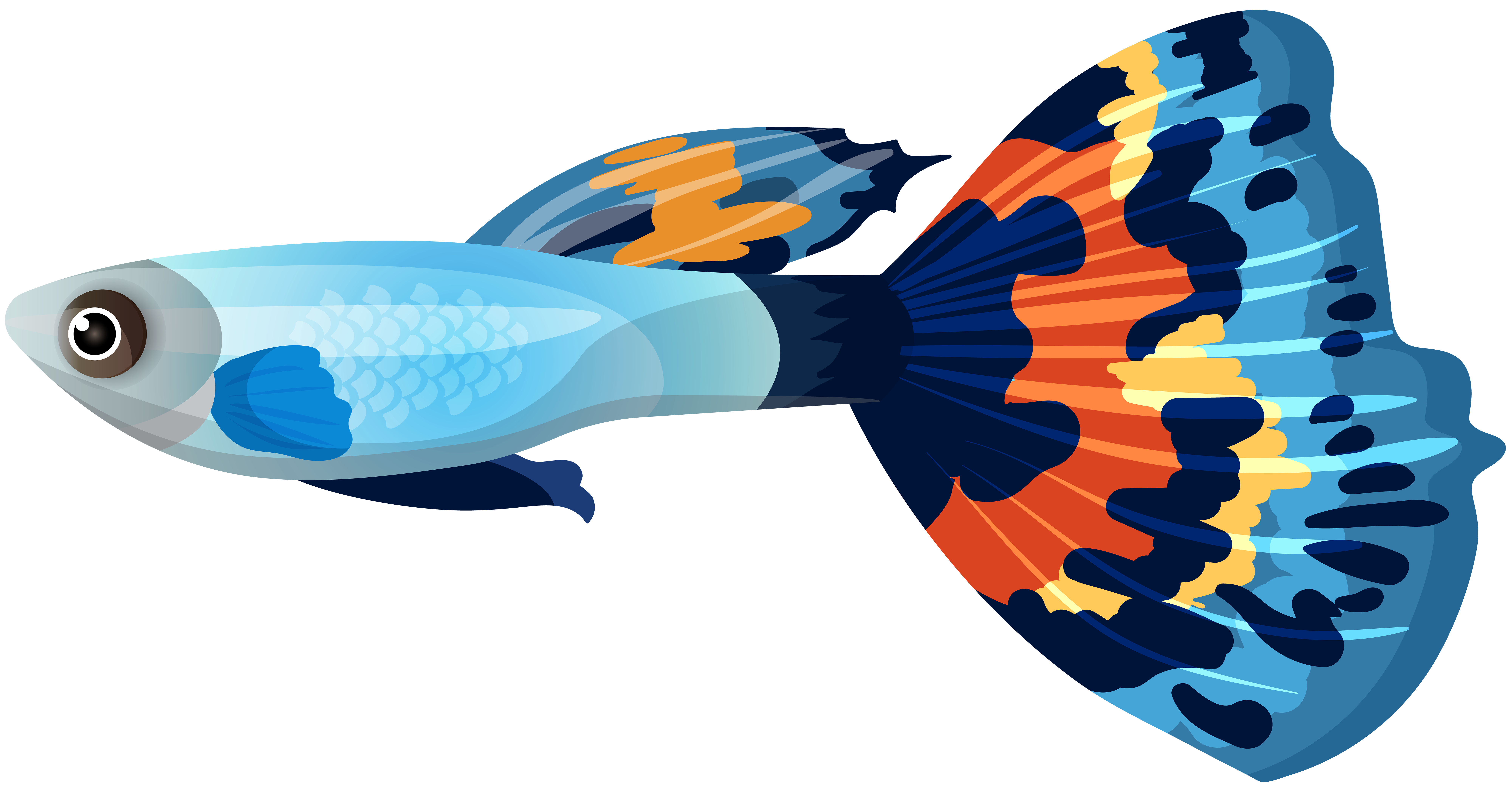 Clipart fish clip art. Male guppy png image