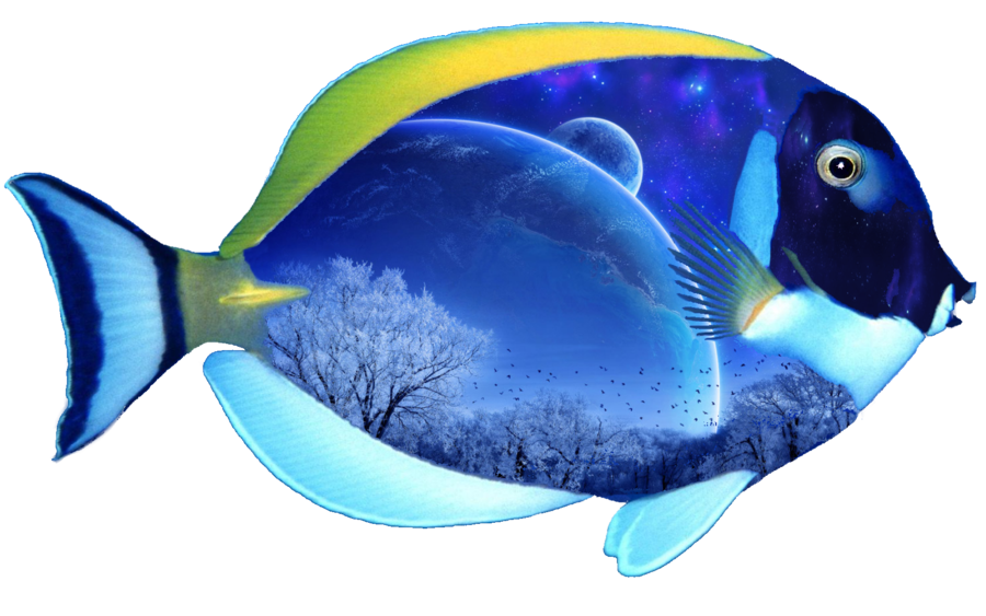 Transparent png pictures free. Clipart fish coral reef fish