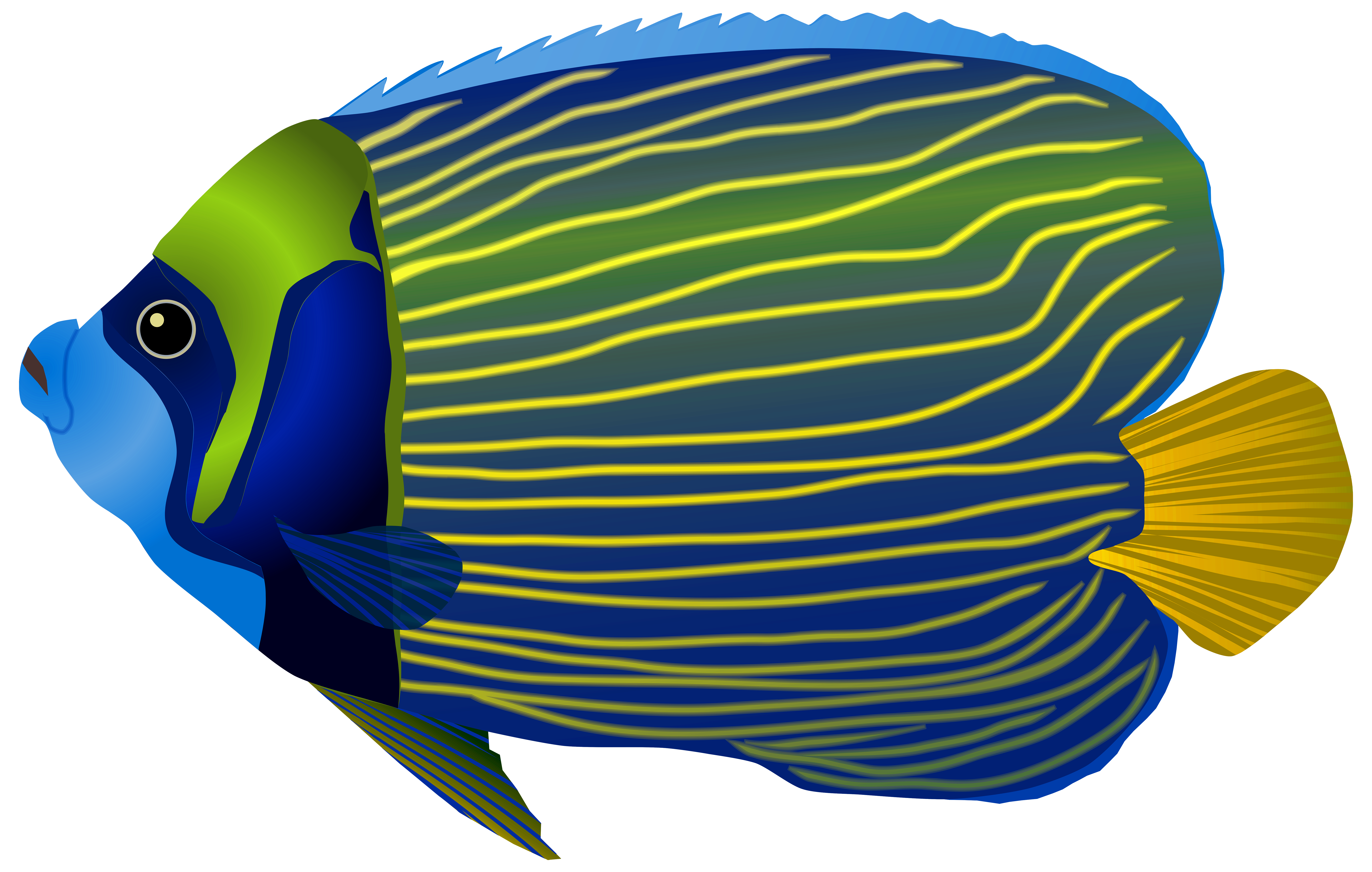 Clipart fish coral reef fish. Blue png clip art