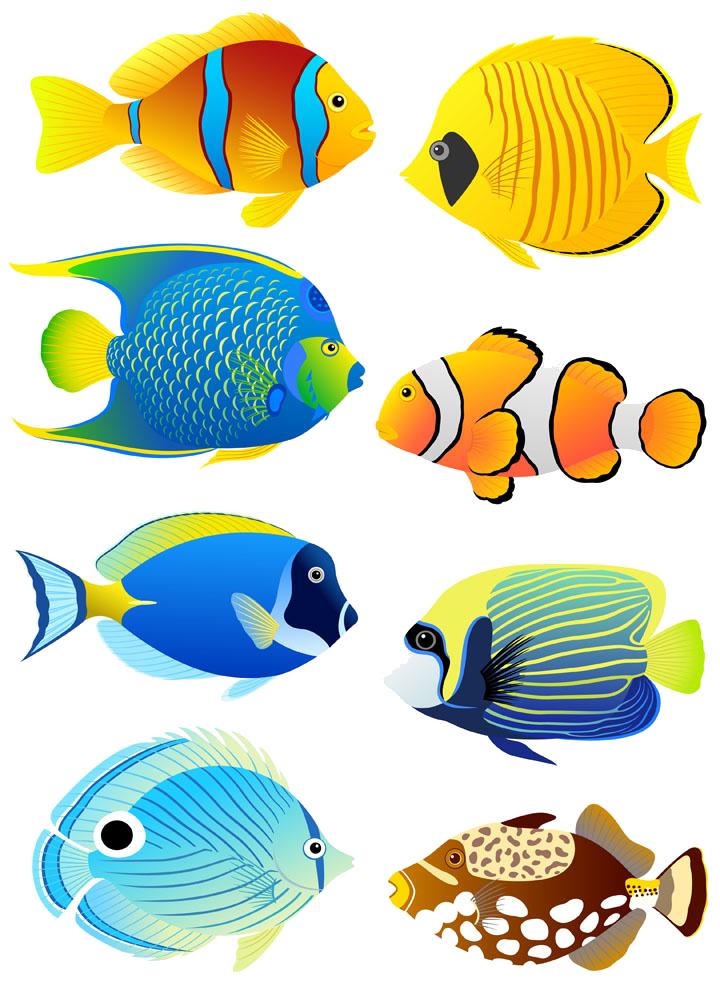Tropical angelfish aquarium clip. Fish clipart coral reef fish