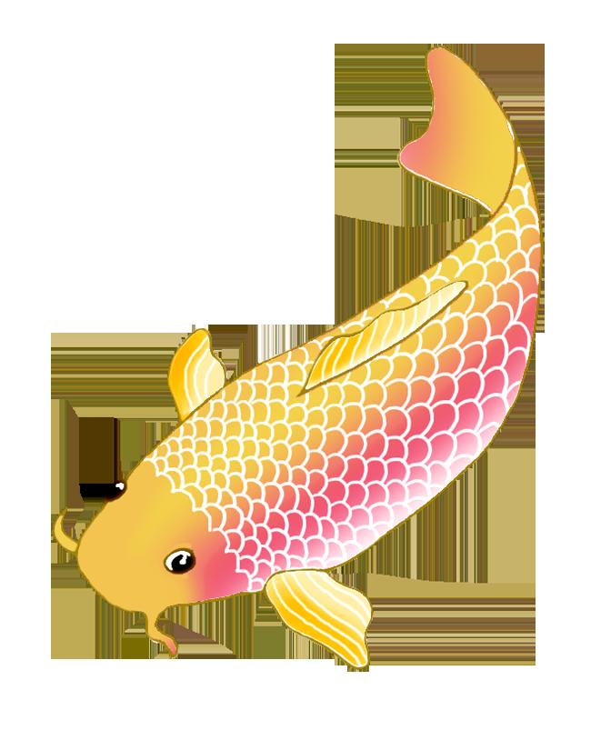 Koi drawings sketch orange. Fish clipart colorful