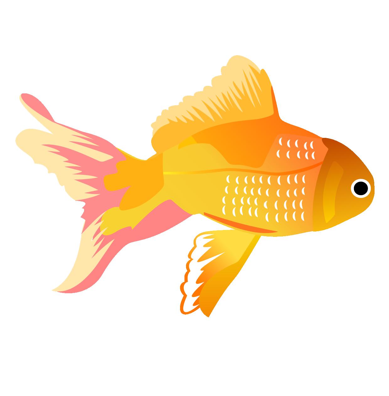 Koi carassius auratus clip. Goldfish clipart fish feeder