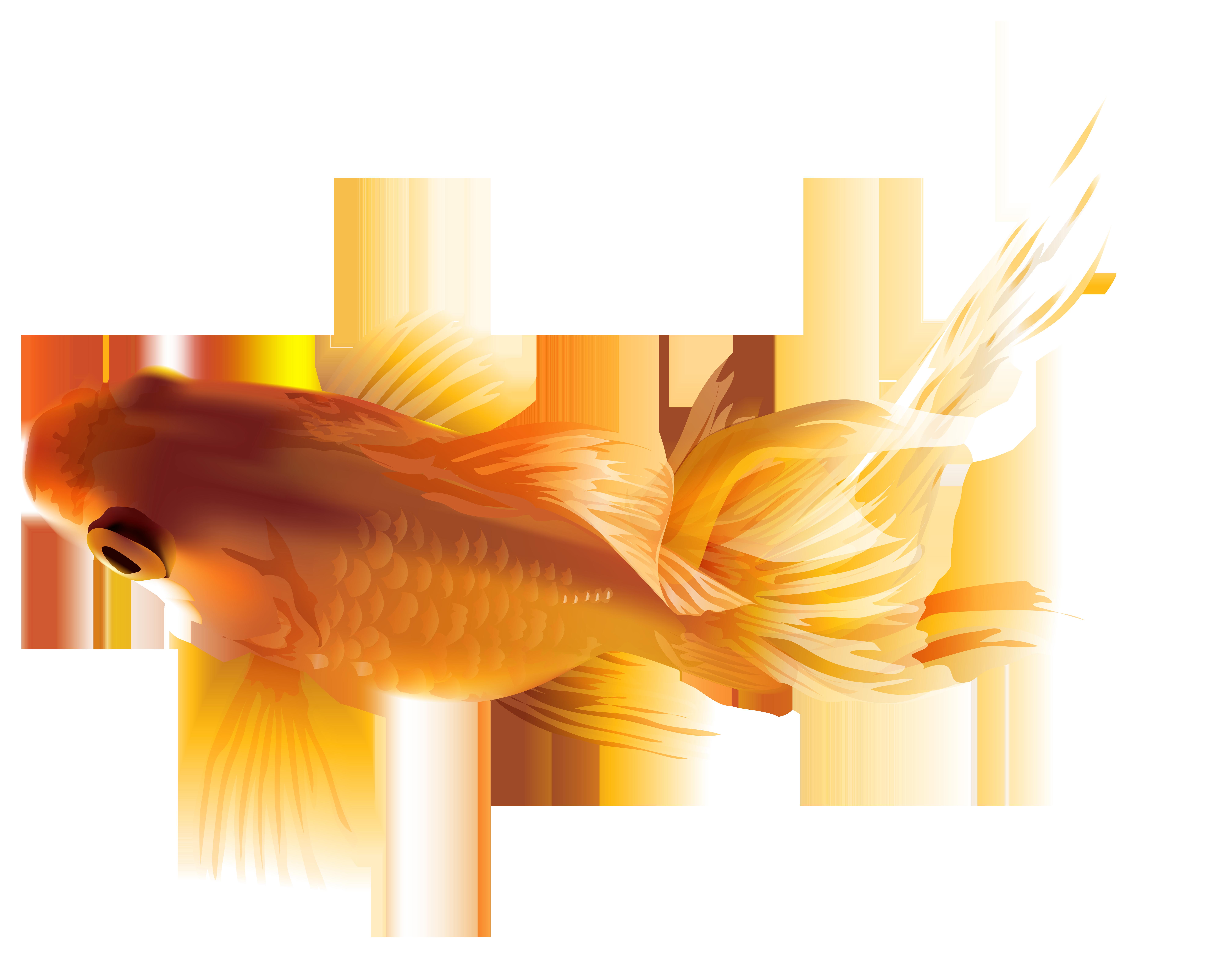 Goldfish clipart border. Png transparent clip art