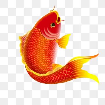 Png vector psd and. Goldfish clipart sea fish
