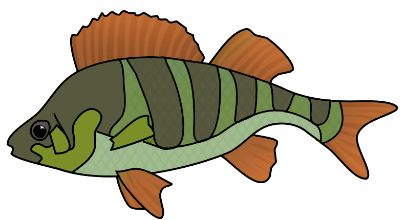 Clipart fish green. Clip art orange drawing