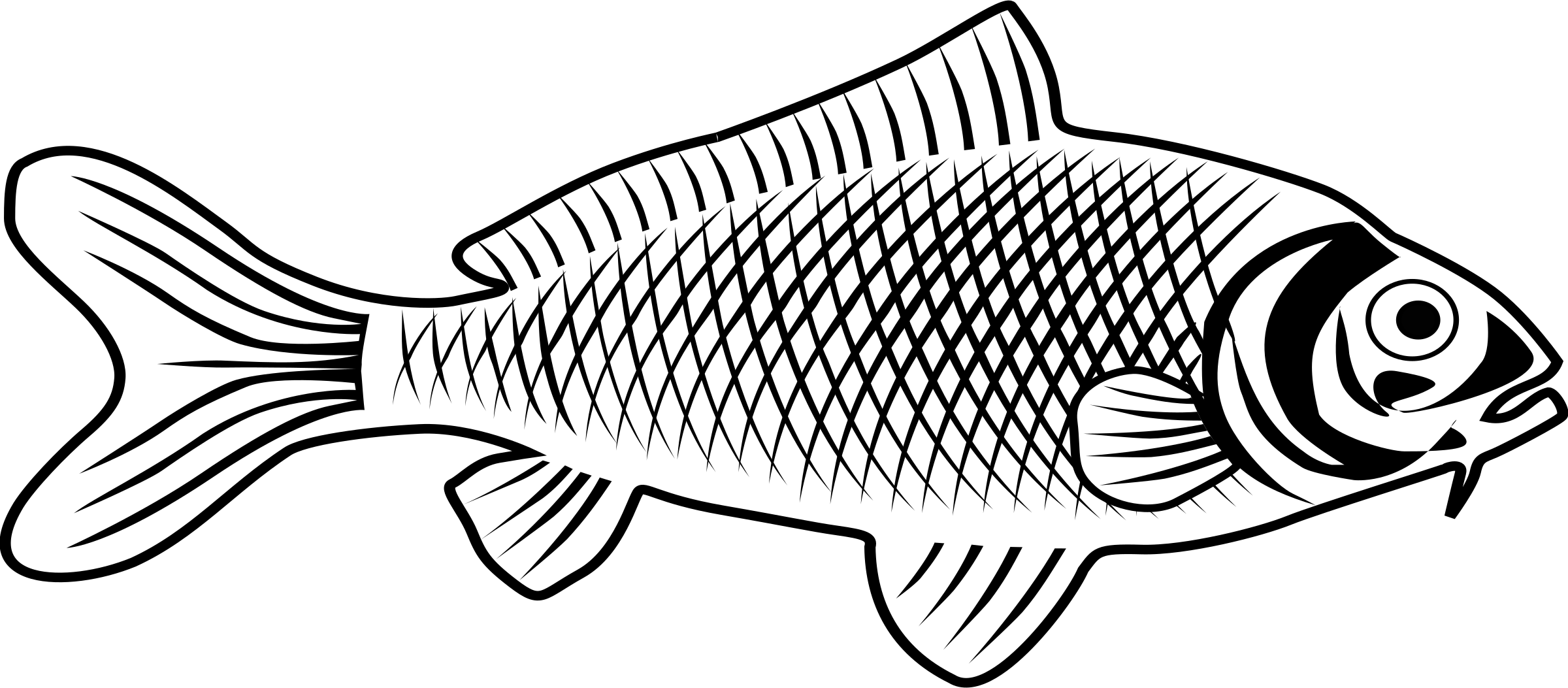 collection of fish. Trout clipart carp