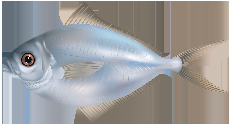 Trout clipart silver fish. Transparent png image web