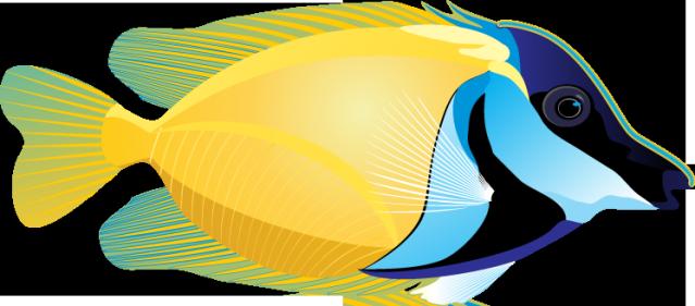 Fish clipart ocean. Graphic design clip art