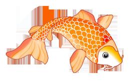 Colorful koi drawings sketch. Clipart fish orange