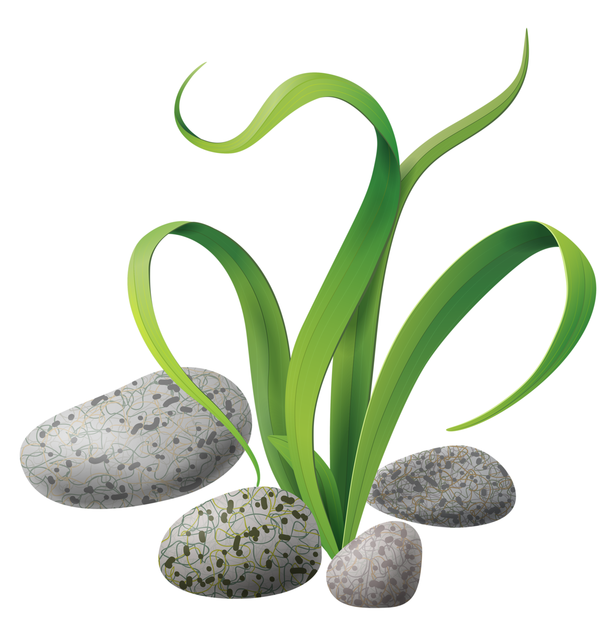 Algae stones png clip. Clipart fish plant