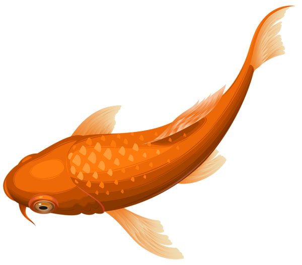 Orange koi fish transparent. Trout clipart carp