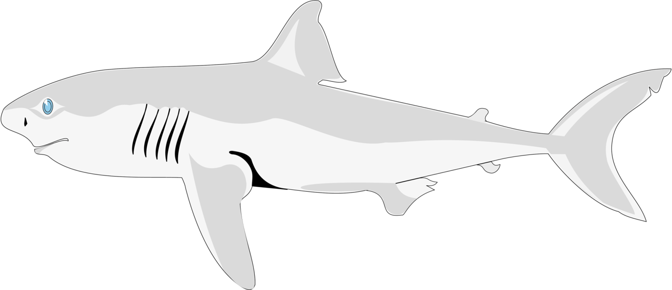 Clipart fish shark. Png free download four