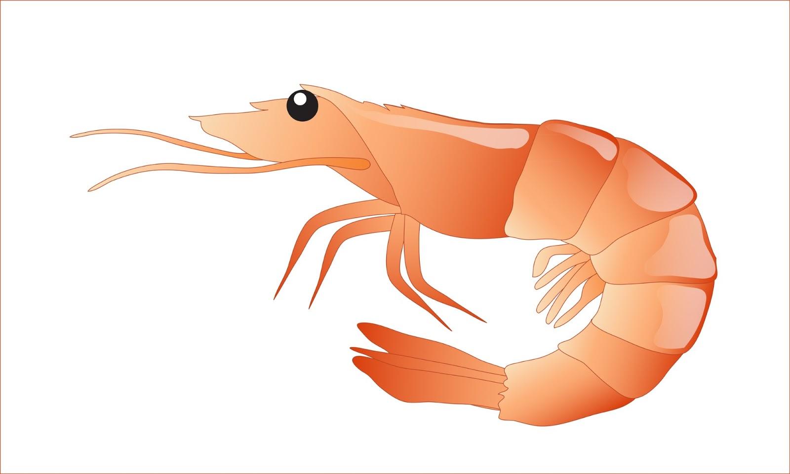 Free download clip art. Salmon clipart shrimp