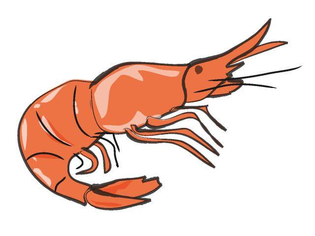 crabs clipart shrimp