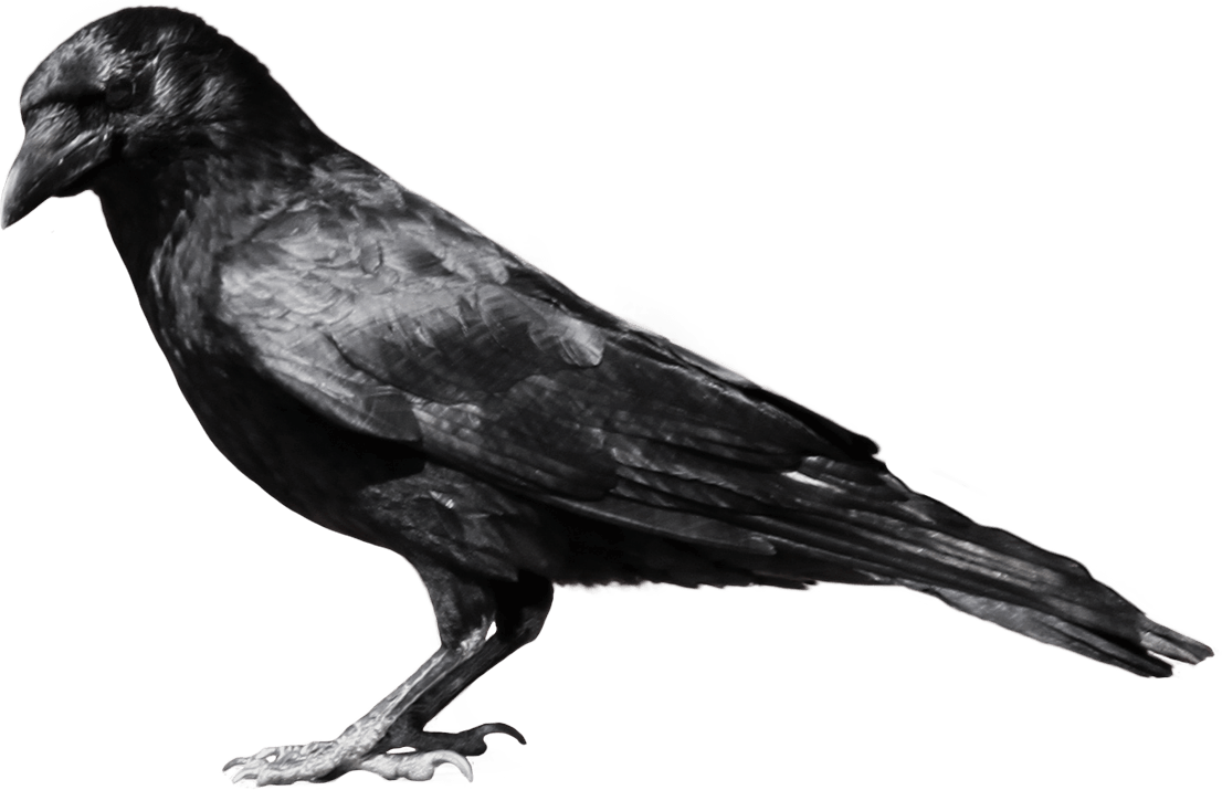 Clipart fish side view. Black crow sideview transparent