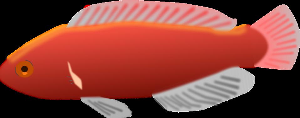 clipart fish transparent background