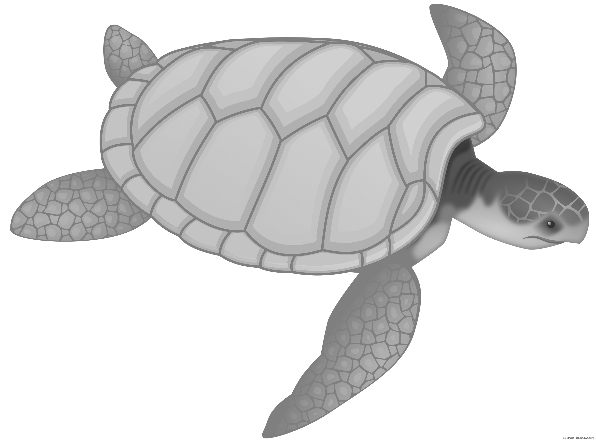 Sea clipartblack com animal. White clipart turtle