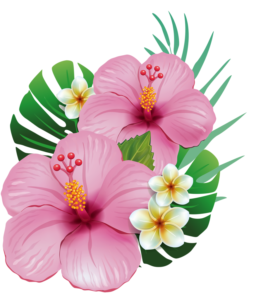 png hawaiian and. Moana clipart exotic flower