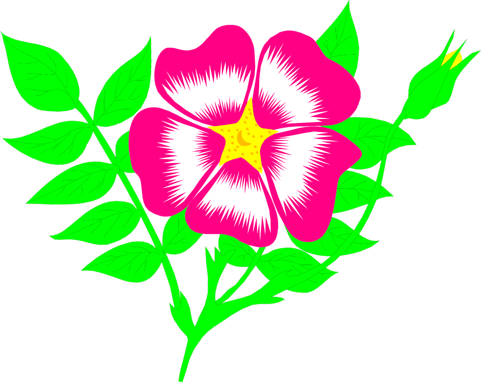 Poinsettia clipart small plant. Free flower illustrations download