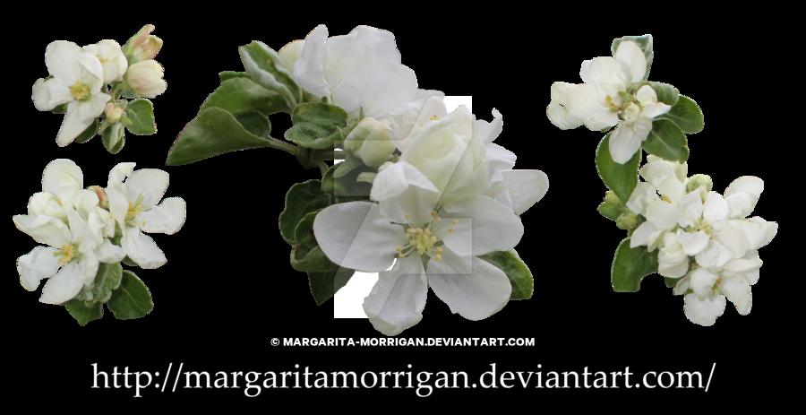 Blossoms by margarita morrigan. Tree clipart apple blossom