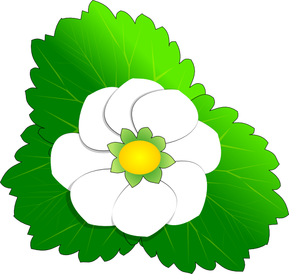 Free floral strawberry. Flowers clipart apple blossom