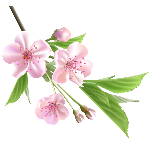 Spring with pink tree. Clipart rose branch