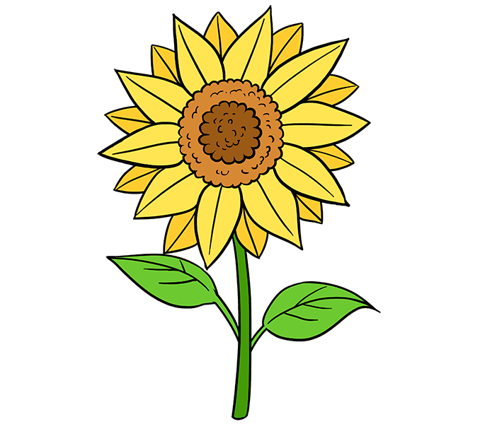 Harvest clipart sunflower. How to draw a