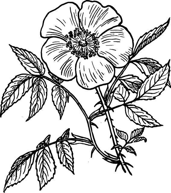 Flower outline png. Image black drawing plants