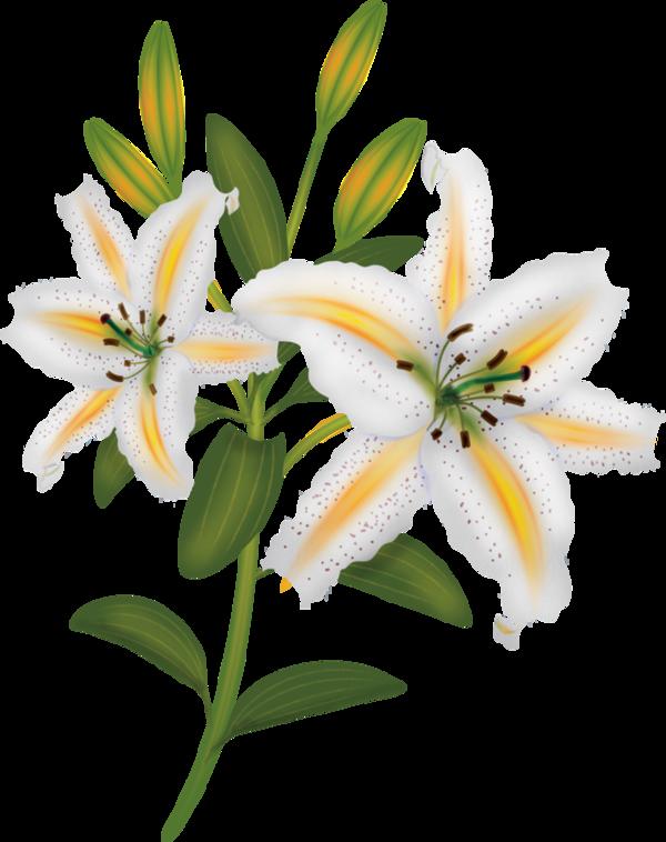 Clipart flowers book. Fleurs flores bloemen png