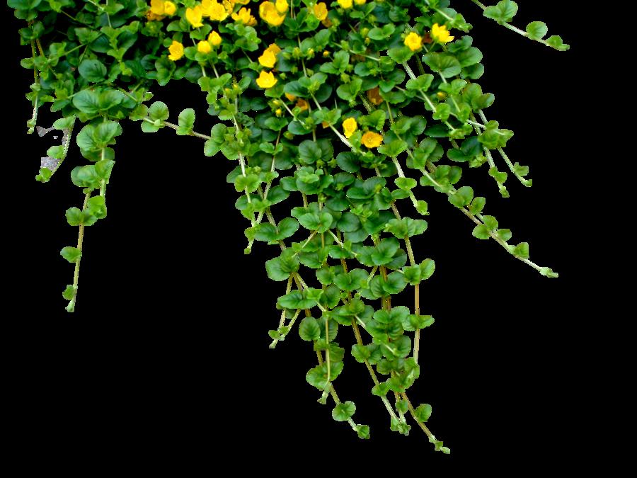 Flower vine png. Garland by black b