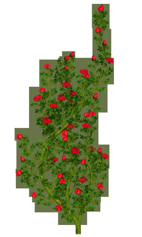 Clipart rose rose bush. Rosebush png picture gallery