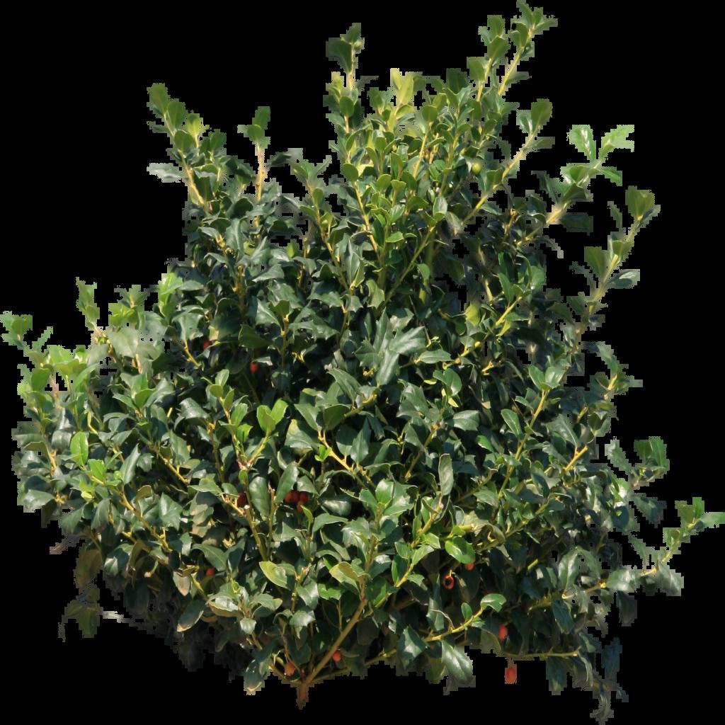 Bush png image pinterest. Planting clipart top view