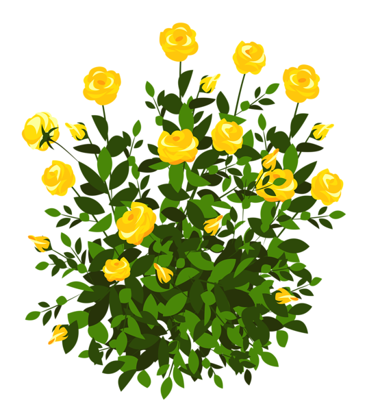 Garden clipart bush. Yellow rose png picture