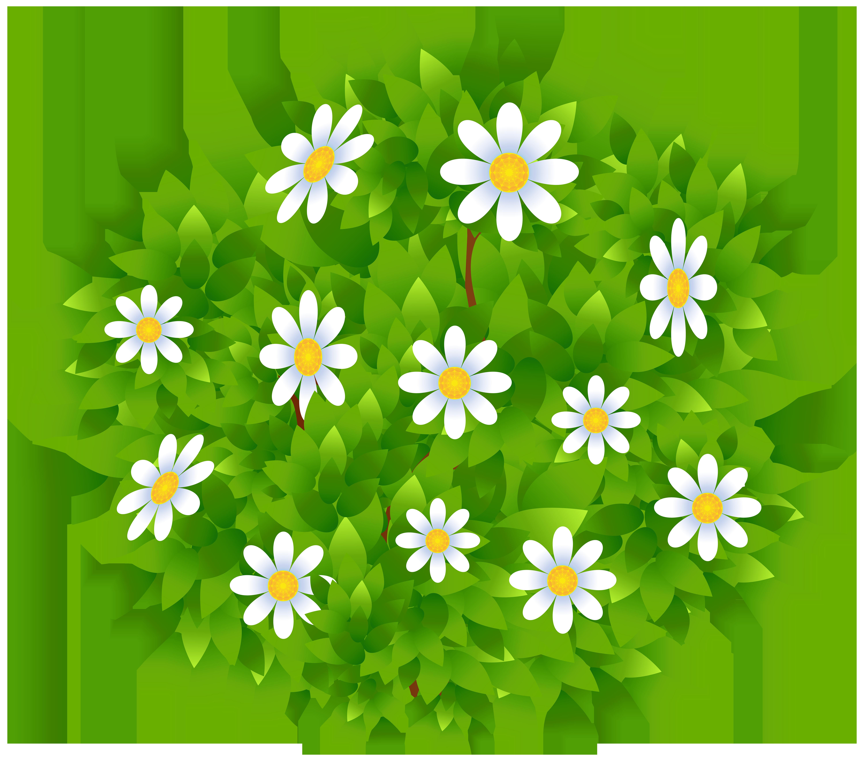 Daisies clipart flowering bush. Flowers transparent png clip