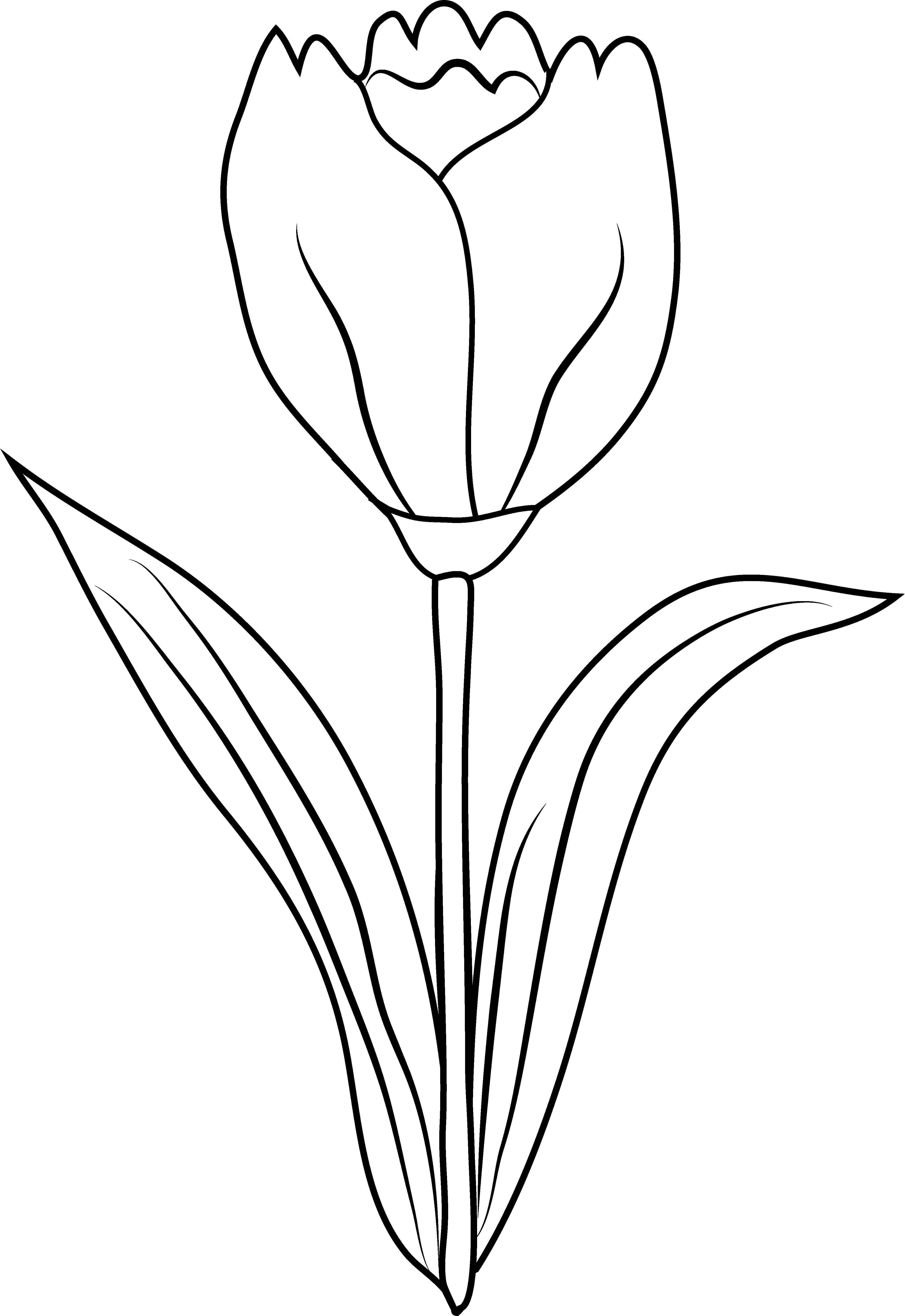 Tulip flower coloring page. Sunset clipart outline