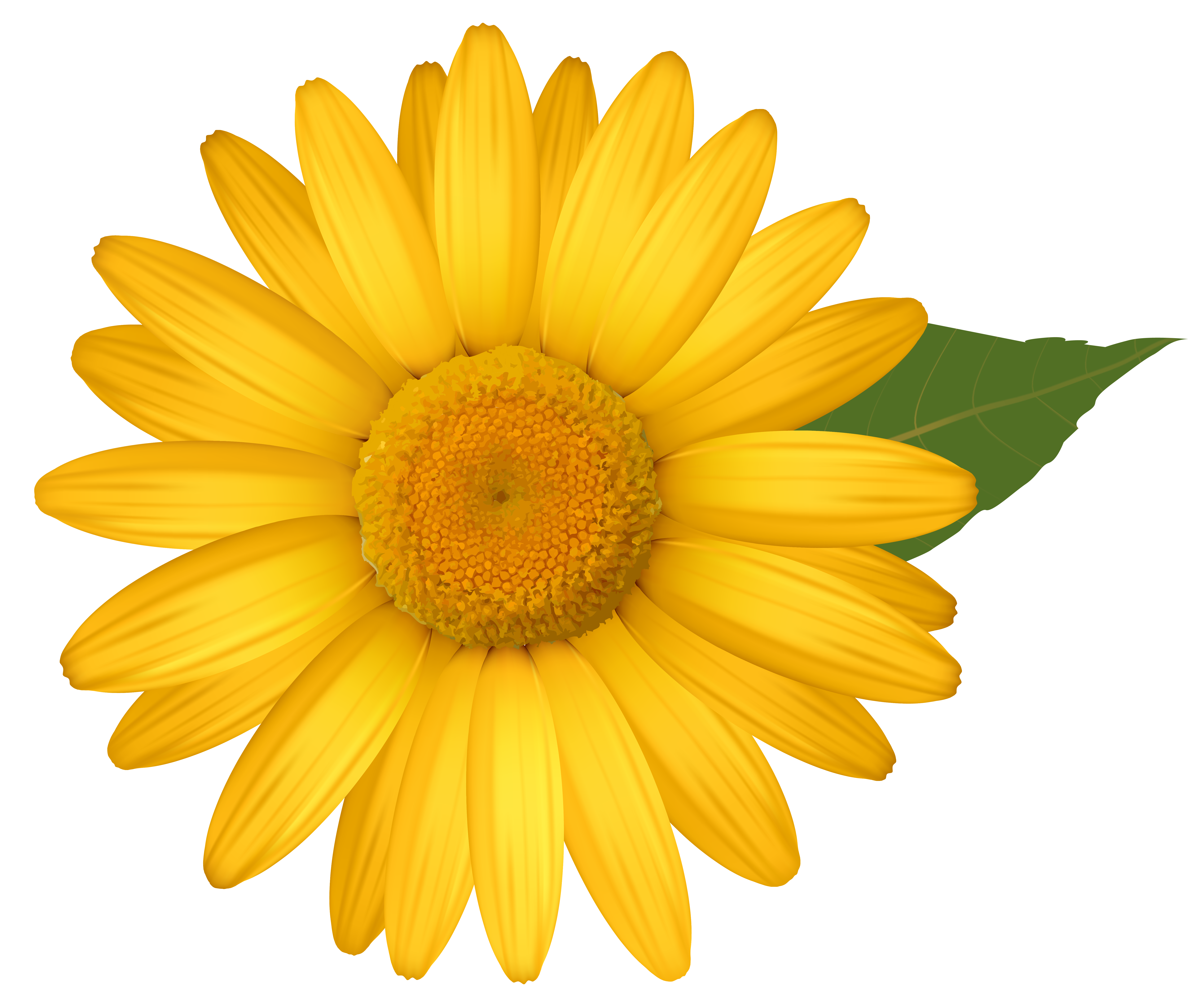 Daisy flower png. Yellow image gallery yopriceville