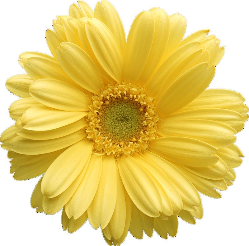 Free clip art clipartix. Clipart flowers daisy