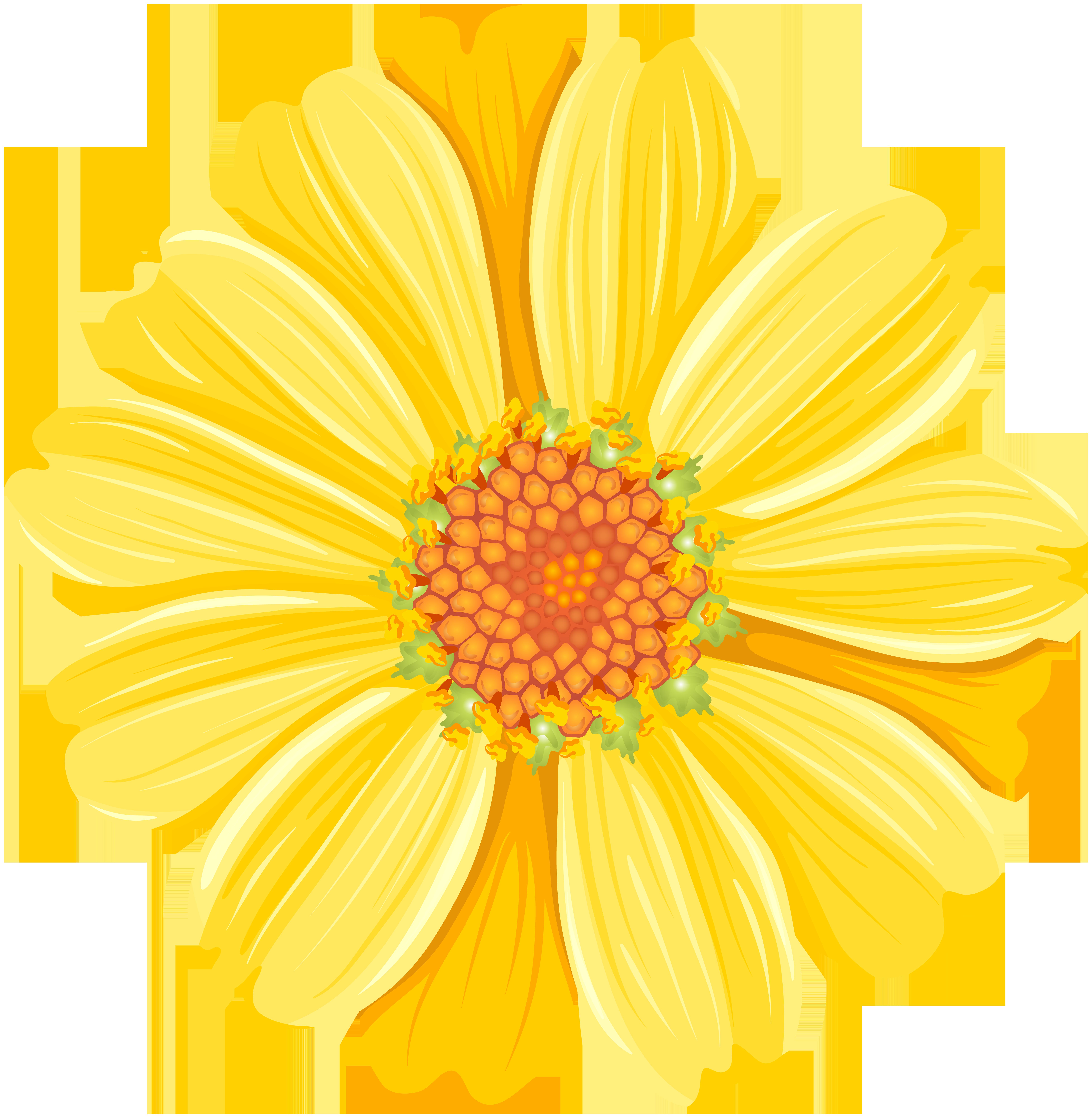 Daisy clipart shasta daisy. Yellow png transparent clip